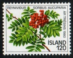 Islande 1980 Sorbus Aucuparia Sorbier Mountain Ash Plant Plante Flore Flora N° 554 MNH Neuf Sans Charnière TB - Unused Stamps