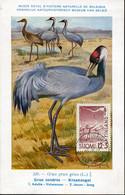 58599 Finland, Maximum 1959 Vogel Oiseau Bird  Grue Cendrèe - Finland