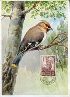 58600 Finland, Maximum 1959 Vogel Oiseau Bird   Seidenschwanz,  Bombycilla Garrulus - Finland