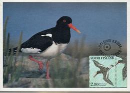 58602 Finland, Maximum 1996  Vogel Oiseau Bird    Haematopus Ostralegus - Finland
