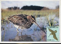 58603 Finland, Maximum 1996  Vogel Oiseau Bird  Gallinago Gallinago - Finland