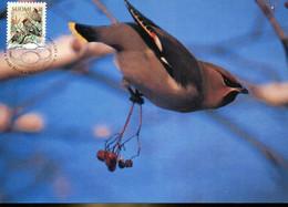 58605 Finland, Maximum 1995  Vogel Oiseau Bird Tilhi  Bombycilla Garrulus - Finland