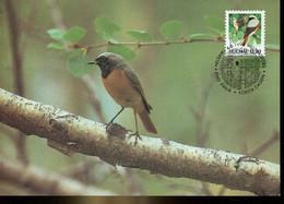 58606 Finland, Maximum 1998  Vogel Oiseau Bird  Phoenicurus Phoenicurus - Finland