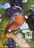 58607 Finland, Maximum 1994  Vogel Oiseau Bird   Gartenrosschwanz,  Phoenicurus Phoenicurus - Finland
