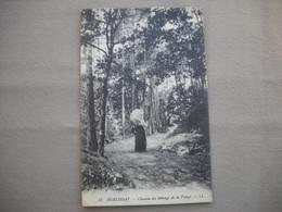 2982   Carte Postale   HUELGOAT   Chemin Du Ménage De La Vierge          29 Finistère - Huelgoat