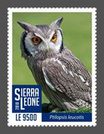 SIERRA LEONE 2018 - White Faced Owl - Mi 10405 - Owls