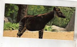 Style Fiche Cartonnée - Merveille Du Monde - Neslé - N°139 - Animaux D'Afrique - L'Okapi - Animaux