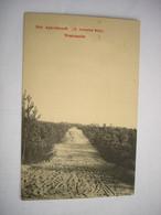 ZELDZAAM (6) - WESTMALLE ( MALLE BRECHT ZOERSEL ) - APERSBOSCH - A TRAVERS BOIS - Malle