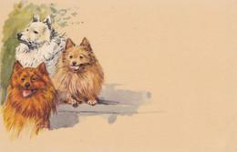 Chien. Pomeranian. Spitz. Hund  Chien Hond  Cani  Old Dog Postcard. Cpa. - Hunde
