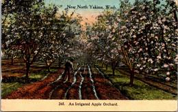 Washington North Yakima An Irrigated Apple Orchard 1912 - Autres