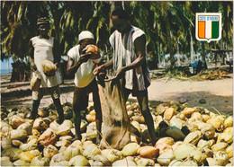 République De La Côte-d\'Ivoire - Récolte Des Noix De Coco - Costa De Marfil
