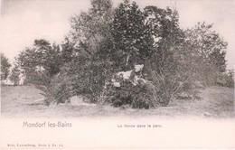 L-Luxembourg/Mondorf - Mondorf-les-Bains.  La Lionne Dans Le Parc (6.789) - Mondorf-les-Bains