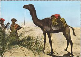 République Islamique De Mauritanie - Chamelier - Mauritania