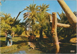 République Islamique De Mauritanie - Oasis - Mauritania