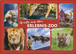 Zoo / Hannover (D-A342) - Sonstige