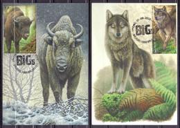 Belgie - 2020 - ** De Big 5 Van Europa  **  Bizon - Wolf - Bruine Beer - Veelvraat - Lynx - A.Buzin -1ste Dag Stempel - Maximum Cards