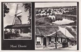 Mooi Drenthe - Korenmolen, Schapen Boerderij - Aan: Muusse Baarn - Holanda