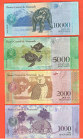 500 Bolivares Venezuela Quinientos 4 Banconote Differenti 2017 E 2018 Animali Animals Orso Tartarughe Gufo Tapiri - Venezuela