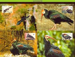 Ngb340mb WWF FAUNA VOGELS BIRDS BALD IBIS VÖGEL AVES OISEAUX LESOTHO 2004 MAX # - Tarjetas – Máxima