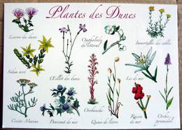 PLANTES DES DUNES LISERON OMPHALODES IMMORTELLES SEDUM ACRE OEILLET LIS DE MER OROBANCHE - Flowers, Plants & Trees