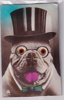 Bulldogge Mit Eingelassenen, Beweglichen Plasticaugen - Patentiertes Verfahren   (A-259-200520) - Chiens