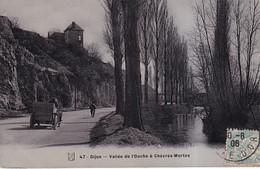 DIJON(ARBRE) - Dijon