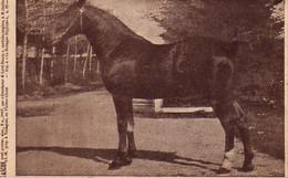 S38-010 Gascon, Poul., Postier - J.-M. Prop. à Talmgoat En Pleyber Christ - Supplément à La Bretagne Hippique - Horses