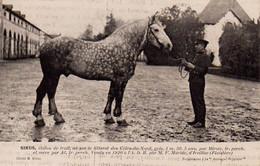 S38-011 Sirus, étalon De Trait - M. F. Marhic D'Irvillac - Supplément à La Bretagne Hippique - Horses