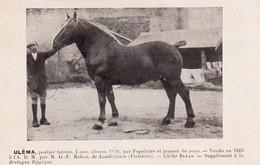 S38-012 Uléma, Postier Breton - G.-F. Rohou De Landivisiau - Supplément à La Bretagne Hippique - Horses