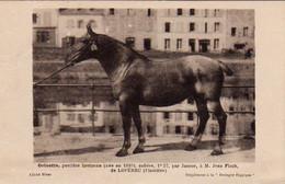 S38-014 Orinette, Postière Bretonne - M. Jean Floch De Lopérec - Supplément à La Bretagne Hippique - Horses