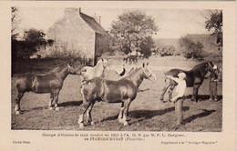 S38-015 Groupe D'étalons De Trait - F. L. Guéguen De Plougourvest - Supplément à La Bretagne Hippique - Horses
