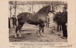S38-016 Terrible, Postière Bretonne - Jean-Marie Raguénès De Ploudaniel - Supplément à La Bretagne Hippique - Horses