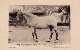 S38-017 Cybelle, Postière Bretonne - Michel Melguen De Landévennec - Supplément à La Bretagne Hippique - Horses