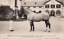 S38-018 Unann, étalon Postier Breton - Au Haras De Lamballe - Supplément à La Bretagne Hippique - Horses