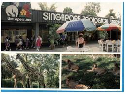 (O 20) Singapore Zoological Garden - Singapore