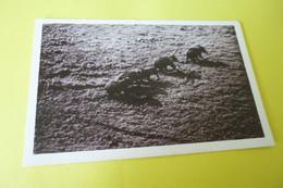BANGUI ....OUBANGUI-CHARI ...AEF ...TROUPEAU D'ELEPHANTS EN PLEINE BROUSSE ... - Central African Republic