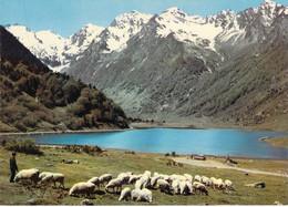 65 - Sur La Route D' ARGELES Au Col D' Aubisque , Le Lac D' Estaing. Troupeau De Mouton - Non Classés
