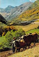 65 - Hautes Pyrénées - Labours En Haute Montagne (boeufs) 1973 - Non Classés
