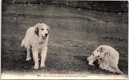 CHIENS - Deux Jeunes Chiens De Montagne En Arrêt - Perros