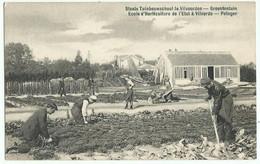VILVORDE, VILVOORDEN (Belgique) – Ecole D'Horticulture De L'Etat. Potager. Très Animée. Editeur Allecourt - Vilvoorde