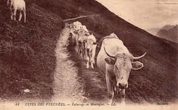 Cpa - Types Pyrénées - Paturage En Montagne - - Non Classés
