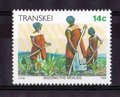 1986, UMM, Xhosa Culture - Transkei