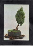 BONSAI ** - Trees
