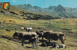 ANDORRE. VALLS D'ANDORRA. CPSM. ELEVAGE BOVIN. PATURAGE DANS LA VALLEE D'ENVALIRA - Andorra