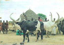 SOUDAN SUDAN ETHNIC - Sudan