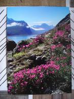 Représentation Du Timbre, Tasermiut Fjord Groenland Du Sud - Groenlandia