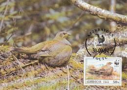 Azerbaijaan 1994 Maxicard Sc #454a 50m Caucasian Grouse Female On Nest WWF - Azerbaïjan