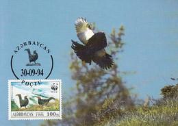 Azerbaijaan 1994 Maxicard Sc #454c 100m Caucasian Grouse 2 Males WWF - Azerbaïjan