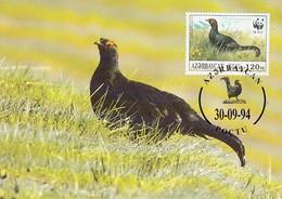 Azerbaijaan 1994 Maxicard Sc #454d 120m Caucasian Grouse Male WWF - Azerbaïjan