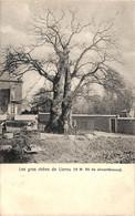 Eghezée - Les Gros Chêne De Liernu (animée Arbre Remarquable 1903) - Eghezée